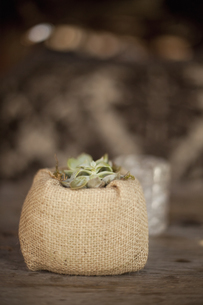 A small succulent plant in a container on a dining table.の写真素材 [FYI02246682]