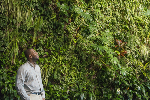 A man looking up at the lush foliage covering a tall wall.の写真素材 [FYI02246712]