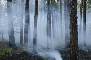 A controlled forest burn, a deliberate fire setの写真素材 [FYI02246735]