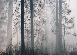 A controlled forest burn, a deliberate fire setの写真素材 [FYI02246757]