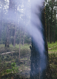 A controlled forest burn, a deliberate fire setの写真素材 [FYI02246963]