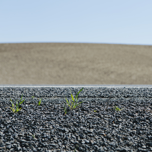 Weeds growing on the roadside, and a view of farmlandの写真素材 [FYI02247013]