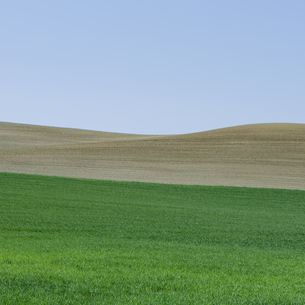 Hills, rolling landscape and farmland, with crops growingの写真素材 [FYI02247046]