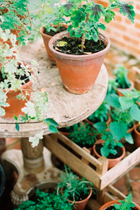 Young plants and seedlings in clay pots in a conservatory.の写真素材 [FYI02247065]