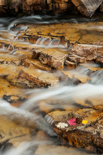 Water flowing over rocks on the Provo River in the Uinta mountains.の写真素材 [FYI02247101]