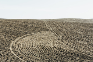 Ploughed earth furrows, patterns on the surface of the soilの写真素材 [FYI02247125]