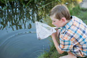 A young boy outdoors with a fishing net, examining the objects in the net, on a river bank.の写真素材 [FYI02247248]