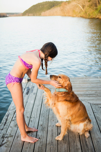 A girl in a bikini with a golden retriever dog lifting its paw up.の写真素材 [FYI02247397]