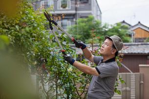 A man working in his garden.の写真素材 [FYI02247588]