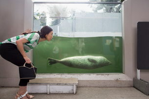 A woman crouching by a marine tank at an aquarium exhibit.  An animal in the water.の写真素材 [FYI02247839]