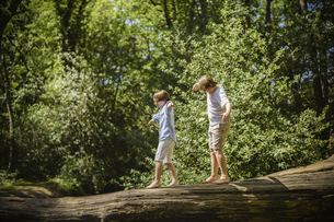 Two boys camping in the New Forest. Walking along a log above the water, balancing with their arms oの写真素材 [FYI02247878]