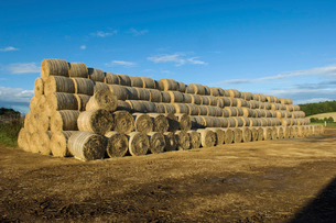 Stacks of round bales of straw in a field, after harvest.の写真素材 [FYI02247882]