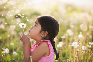 A young child in a field of flowers, blowing the fluffy seeds off a dandelion seedhead clock.の写真素材 [FYI02248074]