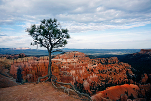 The landscape of Bryce Canyon, with deep valleys and ridges. A single tree.の写真素材 [FYI02248254]