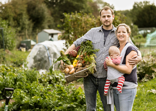 Young family standing in their allotment, smiling. Man holding a box full of freshly picked vegetablの写真素材 [FYI02248284]