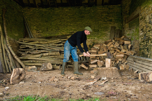 A man chopping wood with an axe, a pile of logs and chopped wood.の写真素材 [FYI02248471]