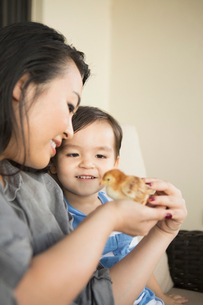 Smiling woman holding a tiny chick in her hands, her young son watching.の写真素材 [FYI02248507]