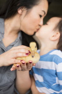 Woman holding a yellow duckling in her hands, kissing her young son.の写真素材 [FYI02248551]
