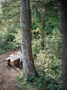 A picnic table set for a party with a cloth and glasses, in a woodland glade.の写真素材 [FYI02249071]