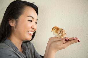 Smiling woman holding a tiny chick in her hands.の写真素材 [FYI02249081]