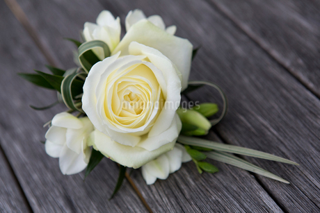 A boutonniere, button hole flower, a cream rose.の写真素材 [FYI02249127]