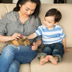 Smiling woman sitting on a sofa, a guinea pig sitting on her lap, her young son stroking the animal.の写真素材 [FYI02249137]