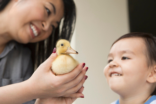 Smiling woman holding a yellow duckling in her hands, her young son watching.の写真素材 [FYI02249228]