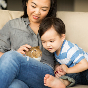 Smiling woman sitting on a sofa with a guinea pig sitting on her lap, her young son watching.の写真素材 [FYI02249278]