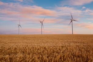 Wind turbines at dusk in a field of summer wheat. Energy production.の写真素材 [FYI02249369]