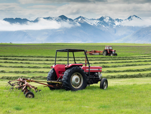 Two red tractors on a farm, working in a field cutting a grass crop.の写真素材 [FYI02249915]