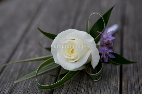 A boutonniere, button hole flower, white rose.の写真素材 [FYI02250015]