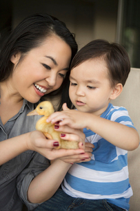 Smiling woman holding a yellow duckling in her hands, her young son stroking the animal.の写真素材 [FYI02250214]