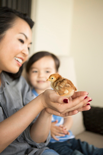 Smiling woman holding a tiny chick in her hands, her young son watching.の写真素材 [FYI02250332]