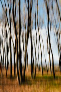 Blurred motion. Maple trees in autumn, moving in the breeze.の写真素材 [FYI02250482]