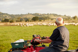 A flock of sheep in a field, and a man on a quadbike looking over his animals.の写真素材 [FYI02250649]