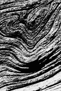 The tree rings of a mature tree, the Jeffery Pine, a textured pattern.の写真素材 [FYI02250884]