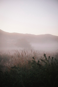 Mist rising from the river in dawn light.の写真素材 [FYI02251072]