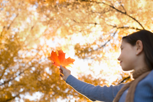 A girl holding up a large orange autumn coloured maple leaf.の写真素材 [FYI02251276]