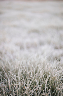 Early morning chill, a light frost on the grass.の写真素材 [FYI02251597]