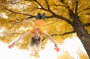 A girl hanging upside down from a tree branch, holding two large maple leaves in autumn.の写真素材 [FYI02251619]