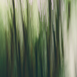 Blurred motion. A forest of Alder trees in Olympic National Parkの写真素材 [FYI02251786]