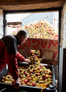 A family cider making business.の写真素材 [FYI02251972]