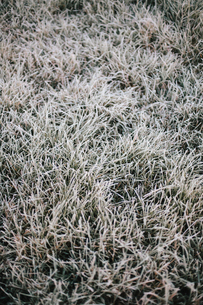 Early morning chill, a light frost on the grass.の写真素材 [FYI02252218]