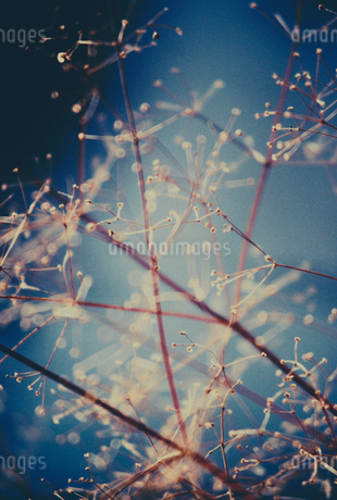 Color infrared image of wildflower and grasses, close upの写真素材 [FYI02252345]