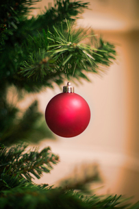 Christmas decorations. A traditional real Christmas tree, decorated with a red bauble.の写真素材 [FYI02252362]