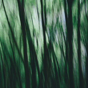 Blurred motion. A forest of Alder trees in Olympic National Parkの写真素材 [FYI02252364]