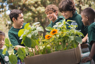 Children in a group learning about plants and flowers looking at sunflowers and young plants.の写真素材 [FYI02252616]