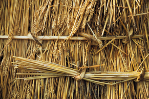 Close up of straw laid on a roof, and pegged into place with wood pegs and twisted reed.の写真素材 [FYI02252951]
