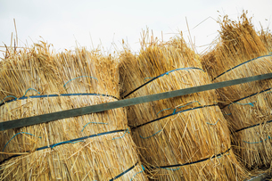 Close up of bundles of straw used for thatching a roof.の写真素材 [FYI02253007]