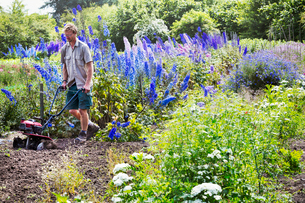 A man using a rotivator on soil in flowers beds in an organic garden.の写真素材 [FYI02253045]
